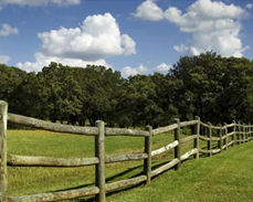 Rural Livestock Fencing Restrict Animals With Post And